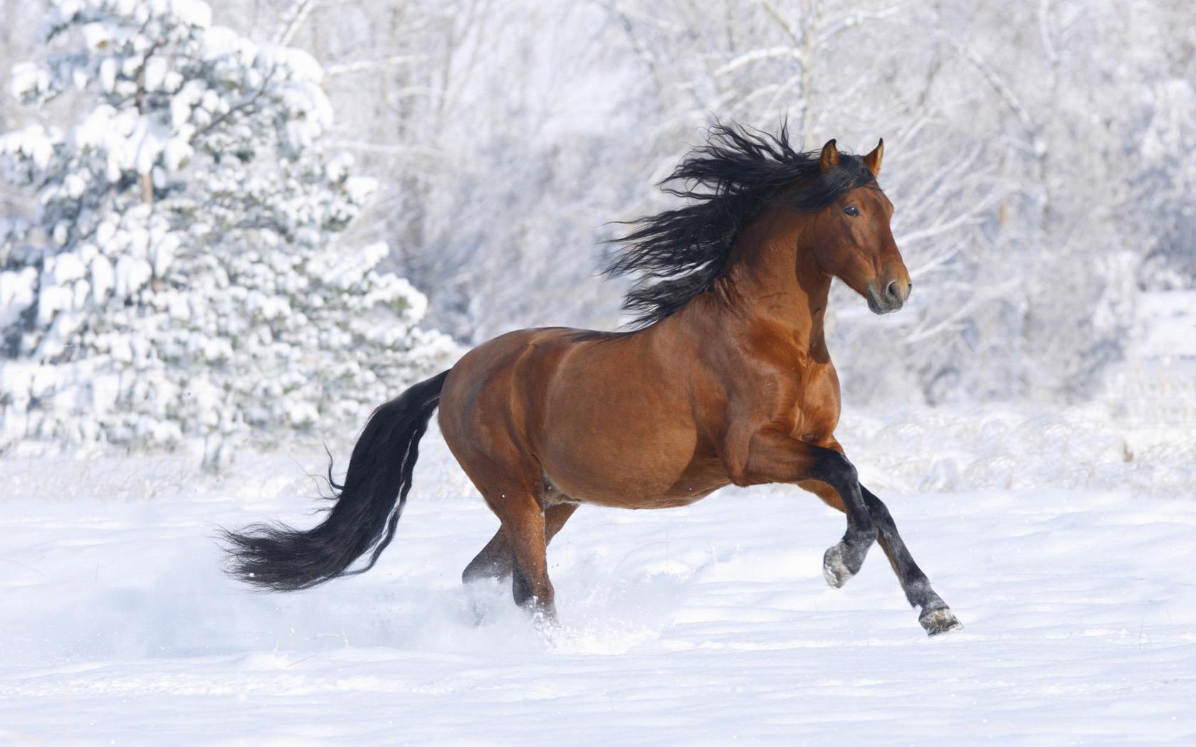 Фото лошадь и осень